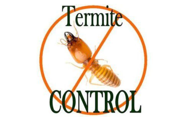 Pest Control in Lahore